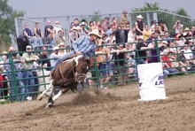 Rodeo !