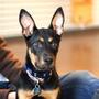 Cassie. Photo courtesy of ALIVE Rescue.