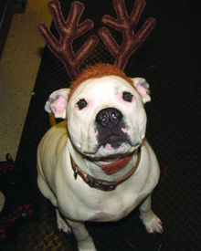 HAPPY-HOLIDAYS-FROM-WE-HEART-PETS