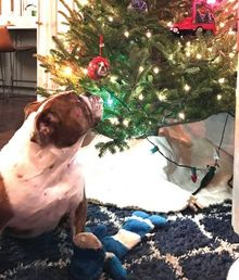 Happy-Holidays-from-your-pets-and-Windy-City-Times