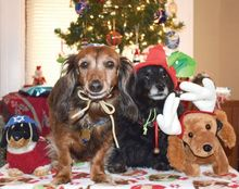 Happy-Pet-Holidays-from-Windy-City-Times