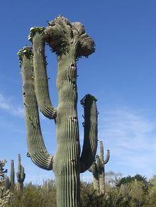 TRAVEL-Arizona-Hot-and-cool