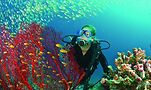Diving off the Seychelles is but one adventure awaiting from VACAYA Cruises. Photo courtesy of VACAYA